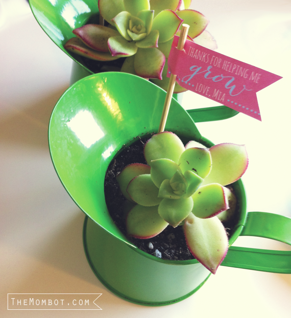 DIY succulent watering can gift | TheMombot.com