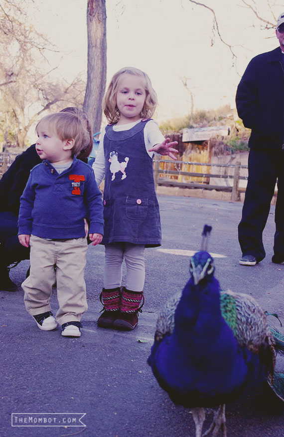 Denver zoo | TheMombot.com